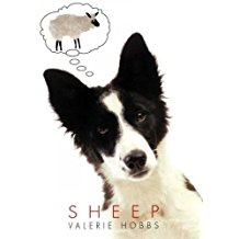 3rd Grade Girls Book Group, Sheep by Valerie Hobbs