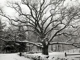 bedford oak