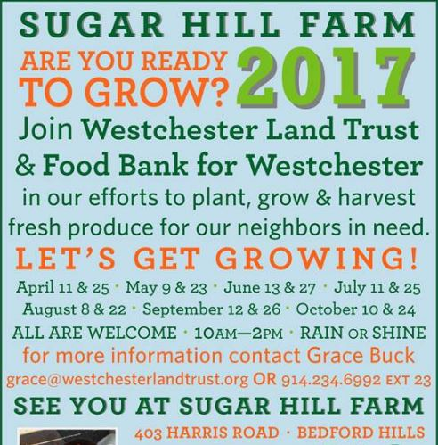 Volunteer at Sugar Hill Farm